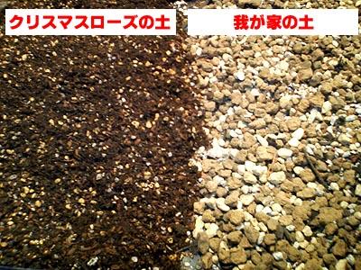 専用用土&肥料2