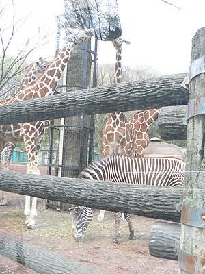 多摩動物園2