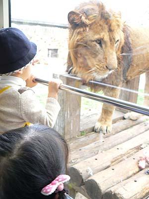 多摩動物園3