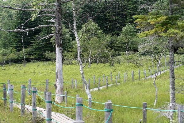 木道・湿原