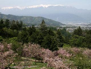 花の丘公園からアルプスを望む