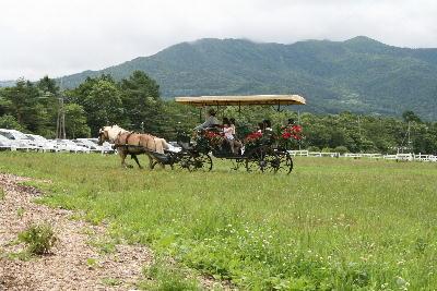 観光用馬車