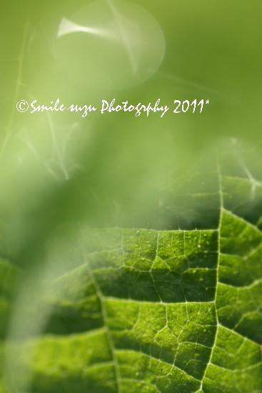 IMG_9891tb.jpg