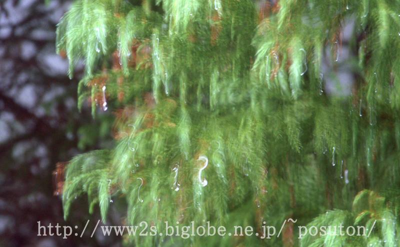 11warabino_3.jpg
