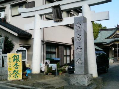 8.銀杏 (2)