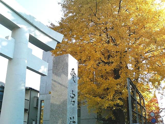 10.手打ち蕎麦 銀杏 (2)