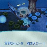 CIMG0520.jpg