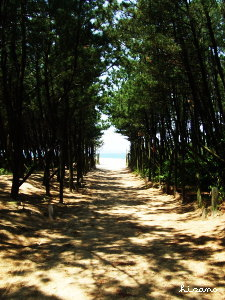 海への道。
