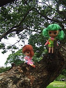 木登り名人?