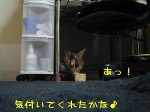 IMG_5924.jpg