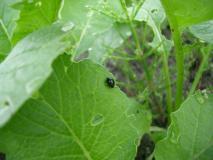 この黒い虫は何?