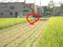 畦に放置ざれている籾袋を回収