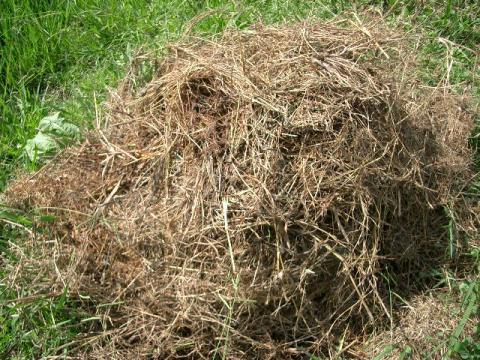 堆肥 カバー無し