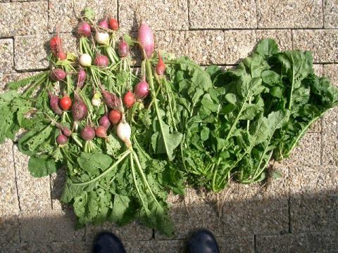 2007.10.17の収穫