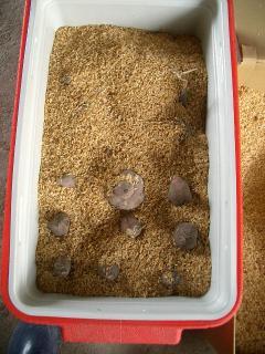 サツマイモの保存