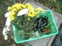 今日の収穫 2007-11-20 9-00-26