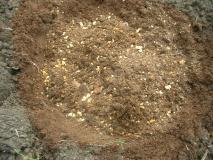 ブルーベリー用の土を入れます