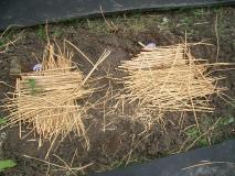 乾燥を防ぐために、藁を敷きました