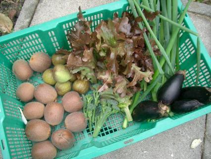 今日の収穫 2007-11-28 15-30-56