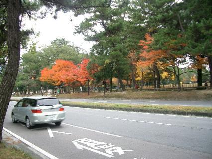 奈良公園の紅葉 2007-11-29 13-02-49