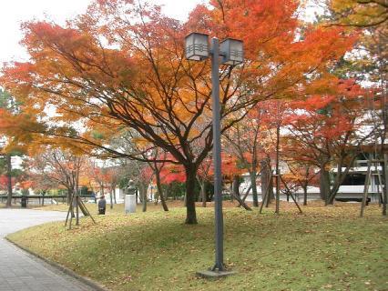 見事な紅葉です! 2007-11-29 13-05-06