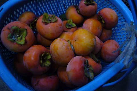 柿がいっぱい… 2007-12-01 3-59-21