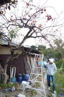 禿げた柿の木 2007-12-01 3-35-21