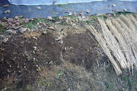 アスパラガスの根元でカットして、油かすと腐葉土、藁をかぶせた 2007-12-09 4-28-14