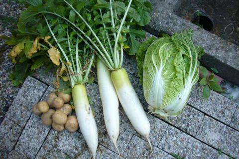 大根と白菜とジャガイモ