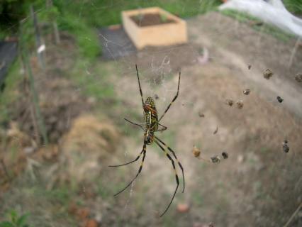 お弁当いっぱい持っている蜘蛛さん