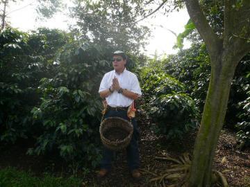 コーヒー豆の摘み方