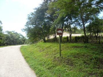 亀横断注意!