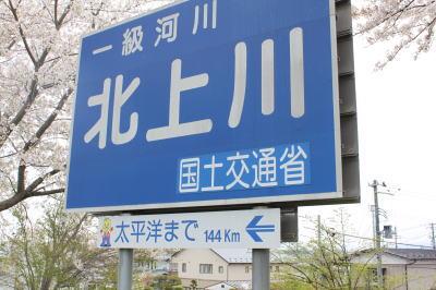 sakura-shiwa04