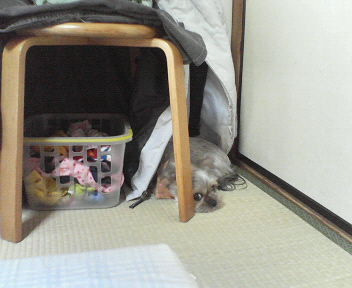 なんか怖いからここで寝ます