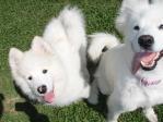 dogstock