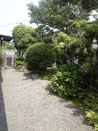 実家の庭(草取り後)