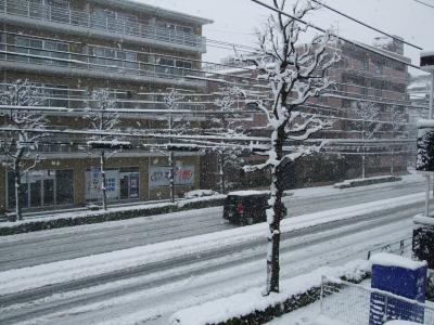 まるで札幌の大通り見たい!!