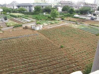 畑の景色 1