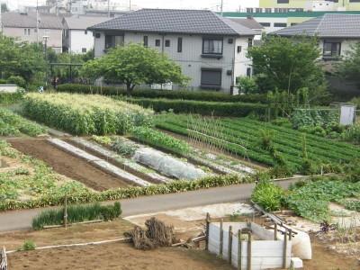 畑の景色 3