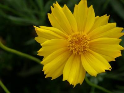 お花 黄色