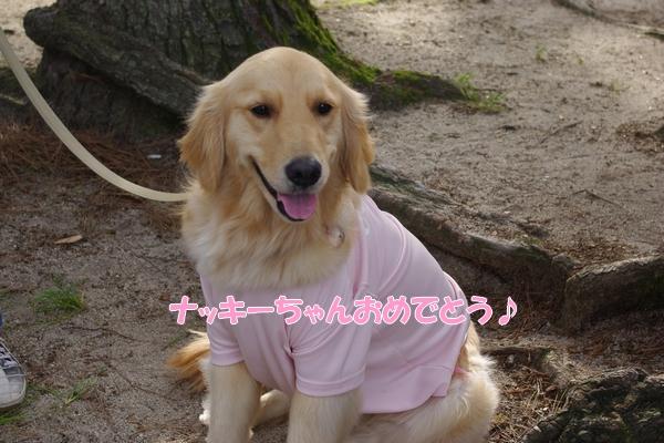 IMGP9460_20110510232611.jpg