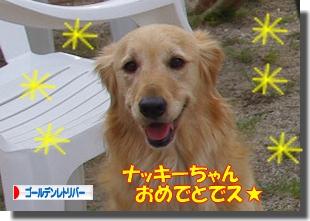 IMGP9506_20110510235932.jpg