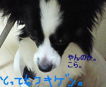 NEC_0020.jpg