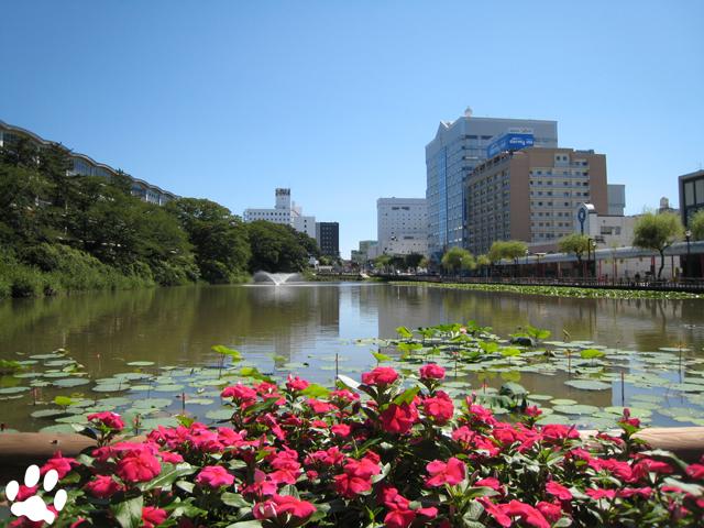 秋田市千秋公園のお堀