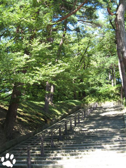 千秋公園の緑