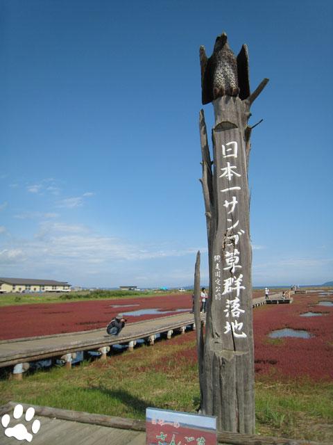 能取湖のサンゴ草