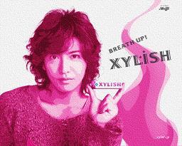 xylish_wp011280.jpg