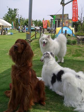 犬友と共に4