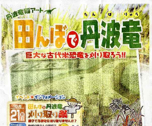 田んぼで丹波竜 で明日刈り取り祭