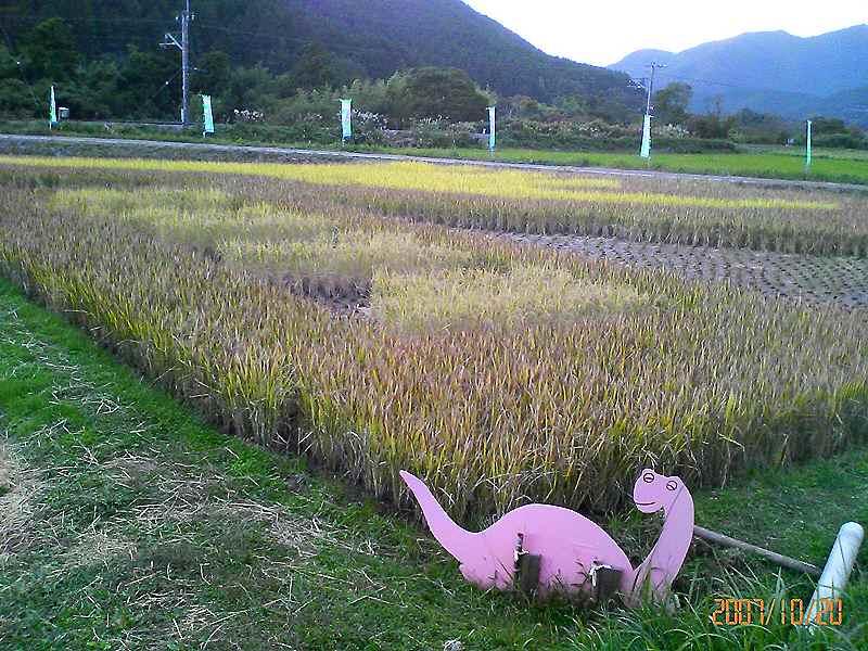 田んぼ竜稲刈り前日の全景